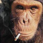 パチ屋で隣のヤニカスの煙がウザかったから団扇で扇いだった結果wwwww